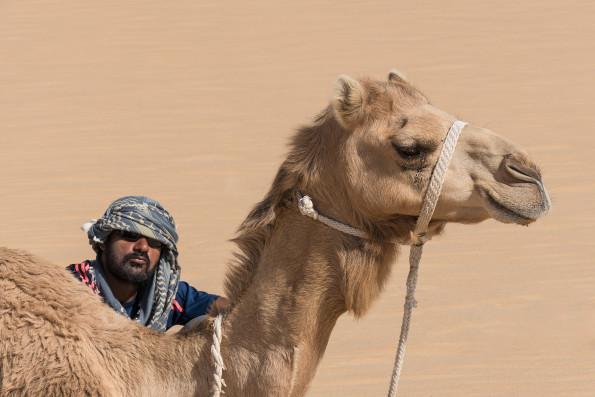 foto di John C.Smith: uno dei dromedari della seconda spedizione nel Rub al-Khali